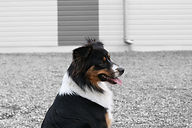 Formation éducateur canin Strasbourg