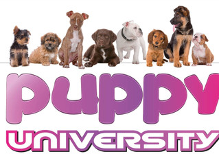 Ouverture Puppy University by EDUCANIN