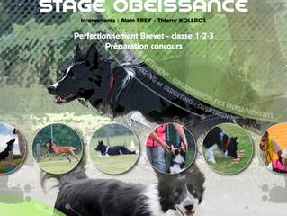 Stage perfectionnement Obéissance   Brevet - Classe 1-2-3 le 3&4 juin 2017