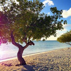 Niki Beach, Aruba 2016.jpg