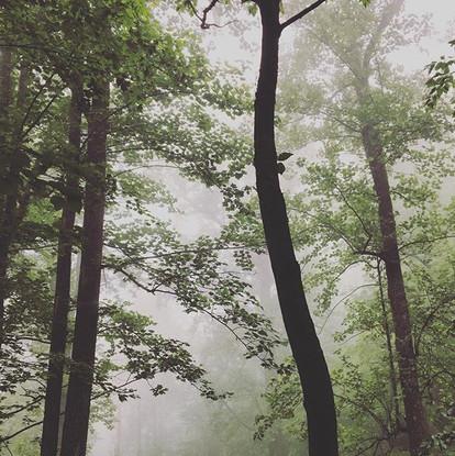 Trail side, Shenandoah National Park, VA