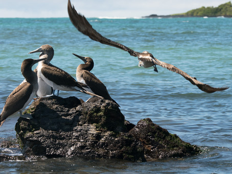 """Galapagos: Hope For the Future"" feature documentary"