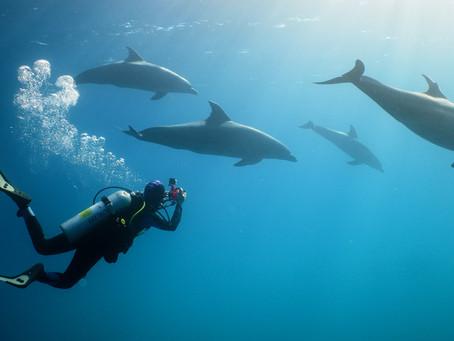 The Corona Comeback of Egypt's Dolphins