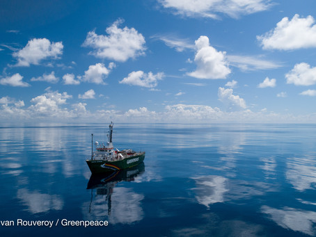 Investigating the world's largest seagrass bank in the Indian Ocean