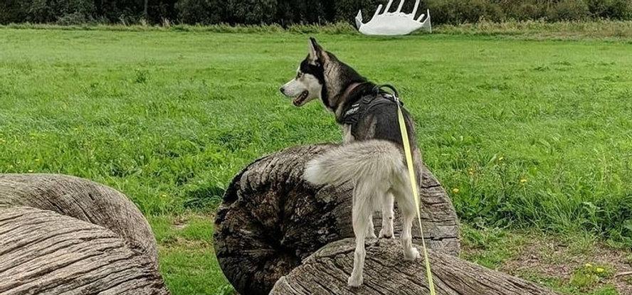 peterborough-dog-walking.jpg