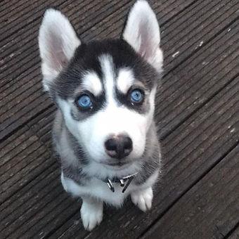 peterborough-dog-sitting.jpg