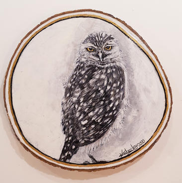 Little Owl (2020)