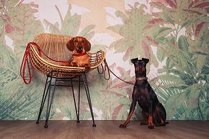 Hunde-Sessel-Fotoshooting-Knipserei.jpg