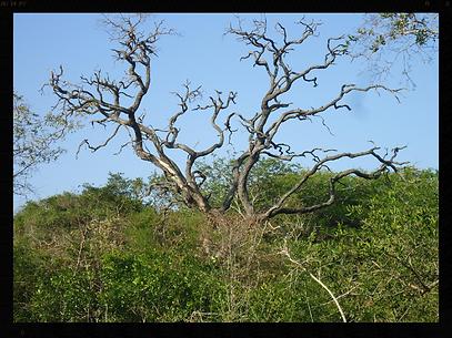 Cammpsites in the indigenous bush of Sodwana