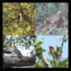 Camping accommodation in Sodwana, pet friendly, birders paradise