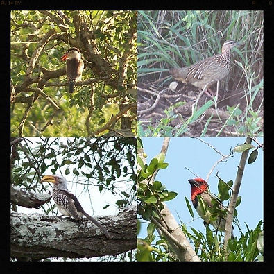 Camping accommodation in Sodwana, pet friendly, birders paradise