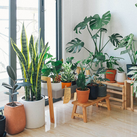 Creating Green Spaces at Home: Indoor Gardening