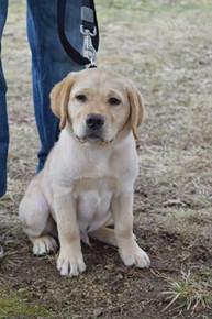 puppy love 2.jpeg