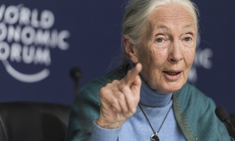 Dame Jane Goodall: Humanity is finished if it fails to adapt after Covid-19
