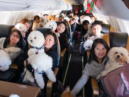 【太報】毛孩東京旅遊團!入住看得到富士山的酒店