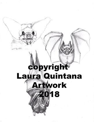 Bat Study Sketch
