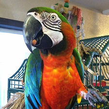 no more biting at Exotic Bird Rescue of Oregon EBR
