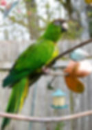 Learn to care for your parrot at Exotic Bird Rescue of Oregon