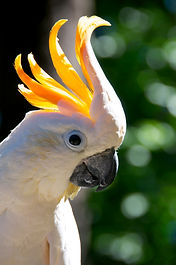 Help out at Exotic Bird Rescue of Oregon EBR