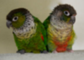 Exotic Parrots need your help at Exotic Bird Rescue of Oregon EBR