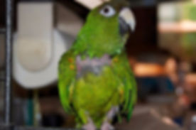 Neglected and abused parrots get help at Exotic Bird Rescue of Oregon EBR