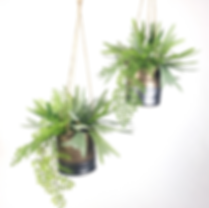 Staghorn fern in modern hanging planters