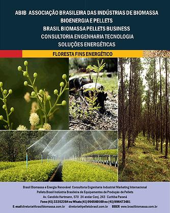 Soluções Energética Floresta Energética.