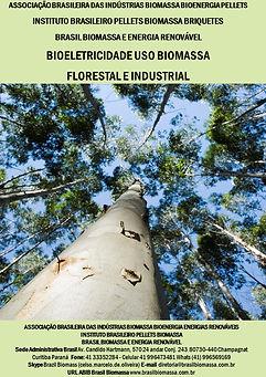 Bioeletricidade Biomassa .jpg
