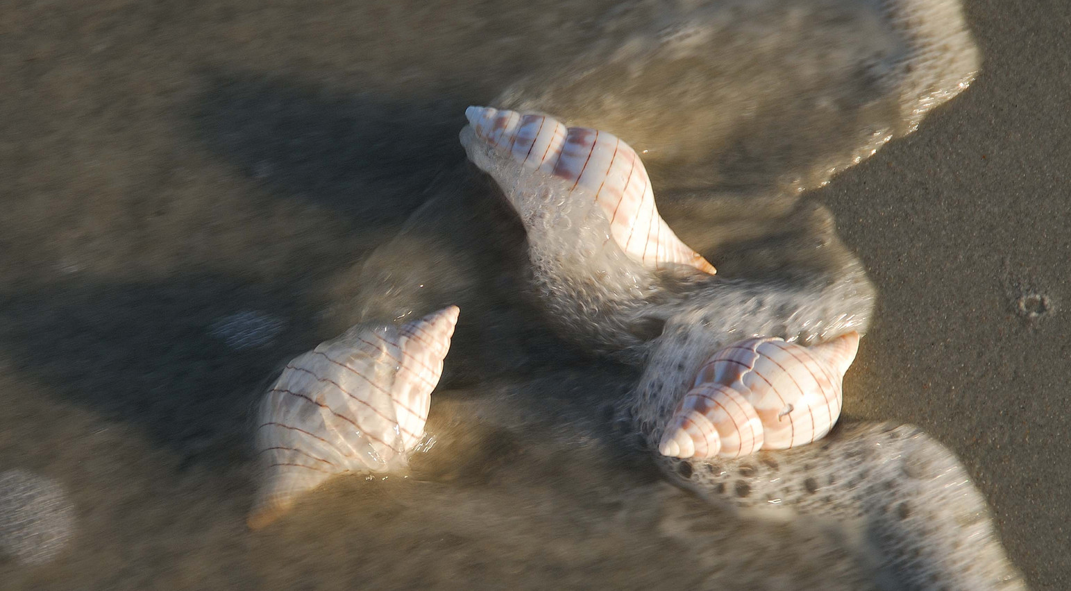 """""""In with the Tide"""".jpg ©SMD"""