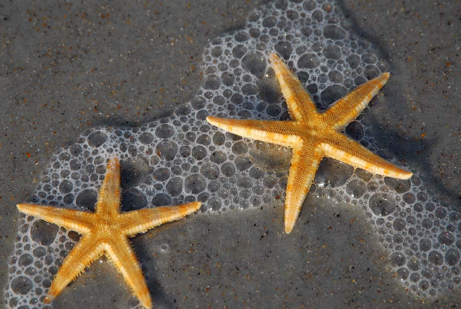 """""""Star Beach"""".JPG ©SMD"""