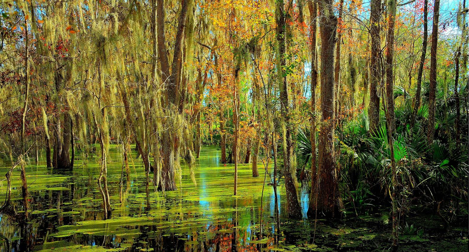 """Florida Fall"" ©SMD"