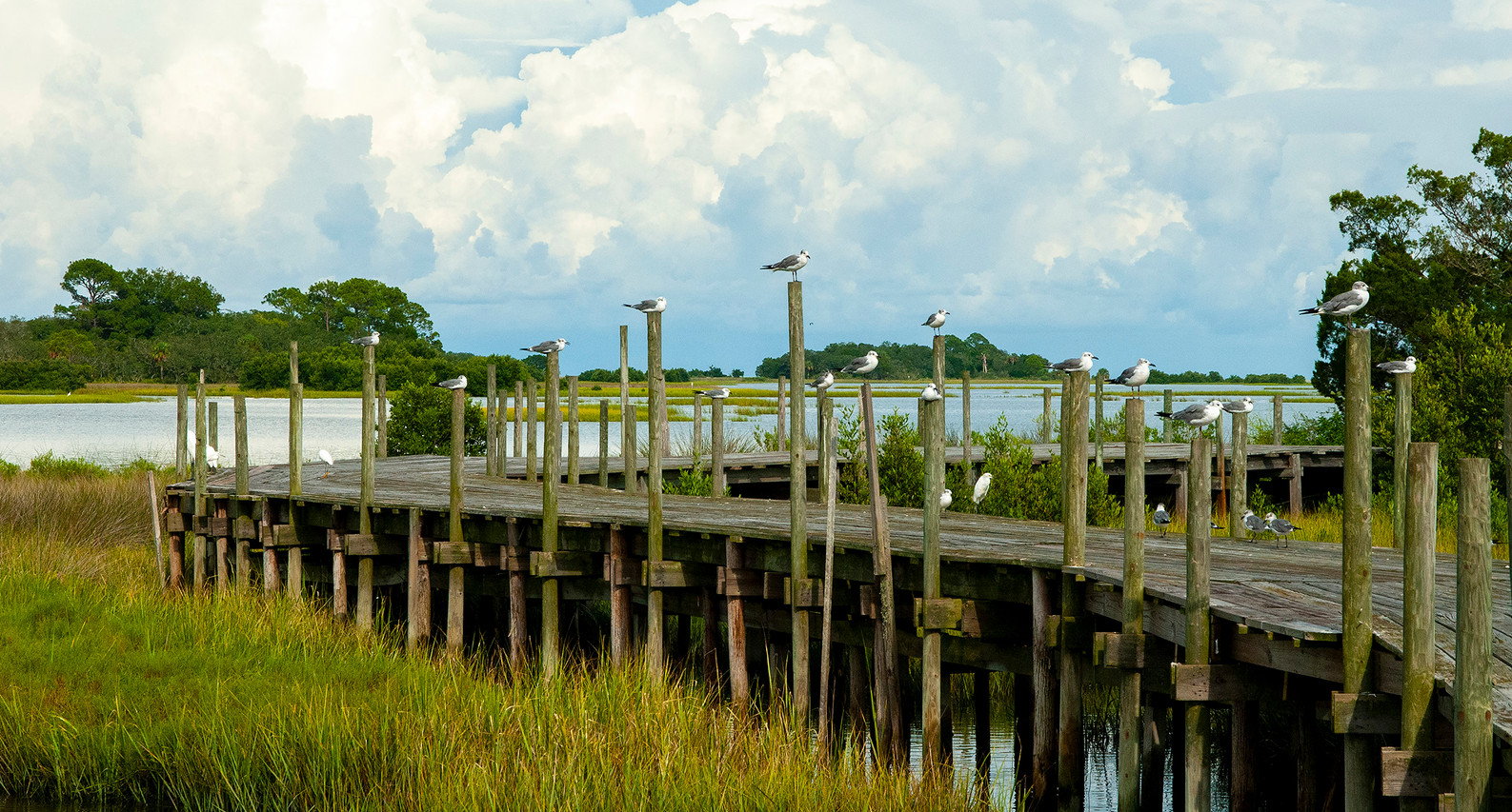 """Destination Cedar Key"" ©SMD"