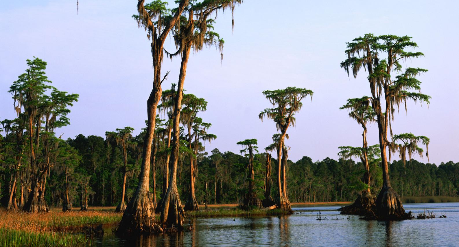 """Old Florida"" ©SMD"