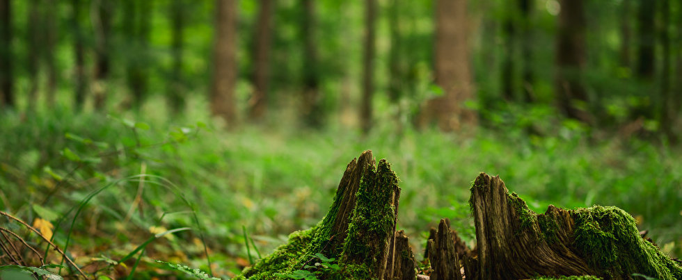 Forests_Tree_stump_Moss_Trees_Bokeh_5778