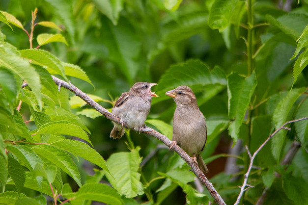 Fledgling and Mother