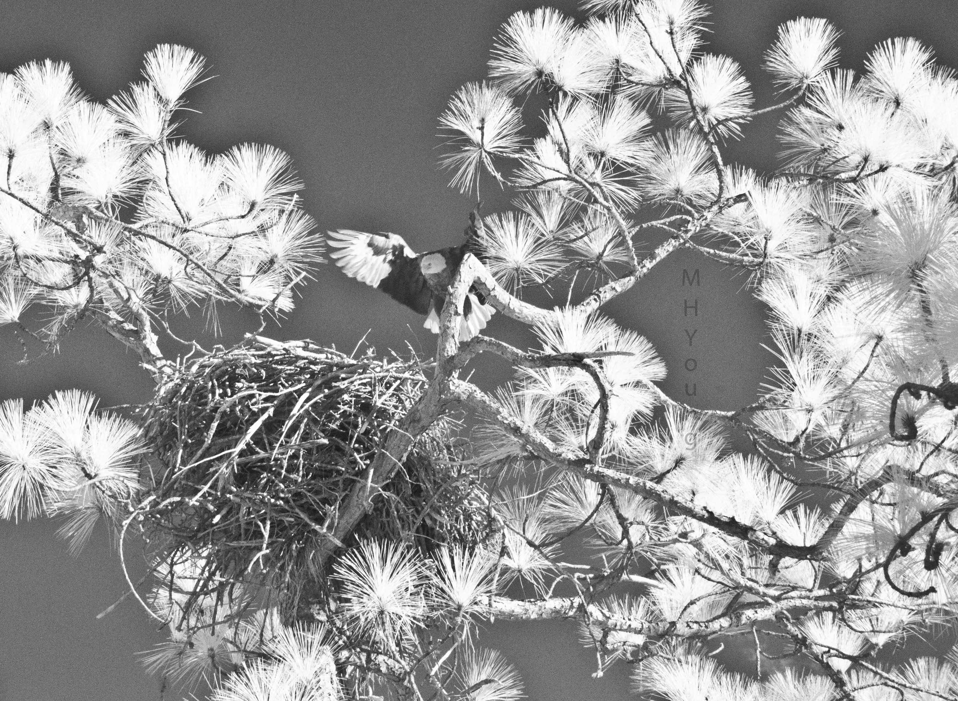 I R Eagle Coosa  # 7 wmlr