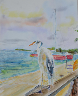 Pretty Bird Jamaica