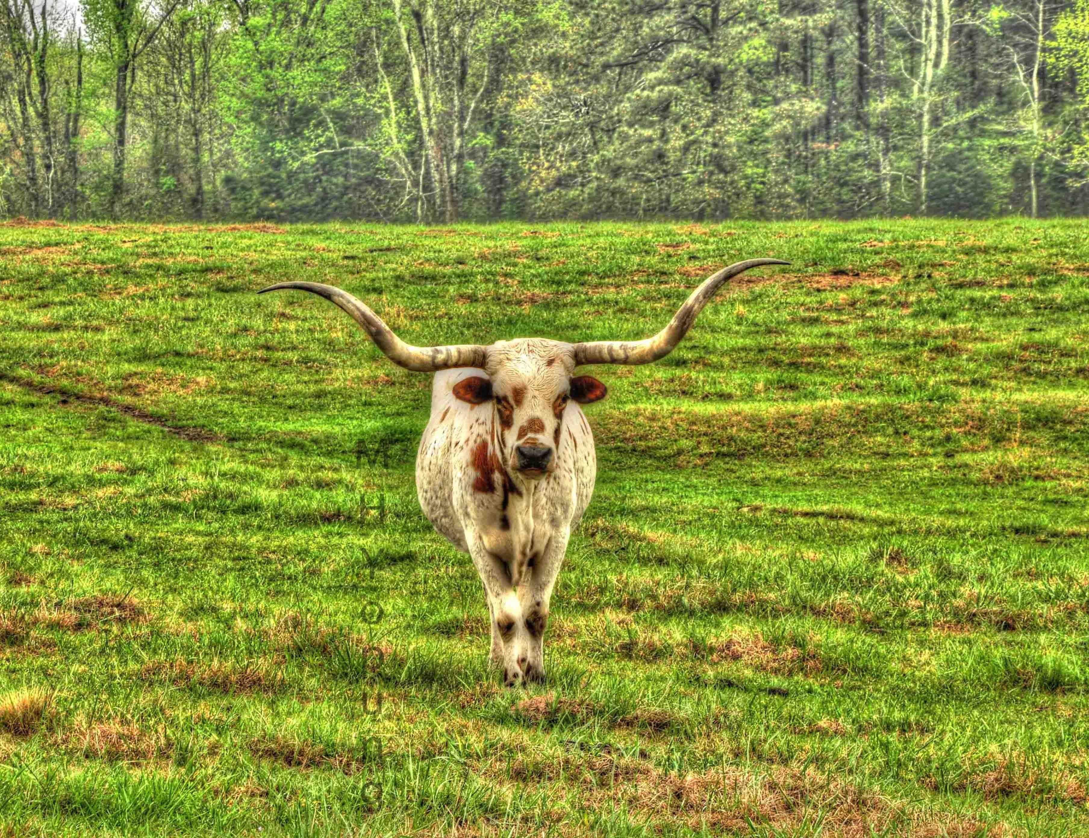 One lonly Cow ! ldiWM.jpg