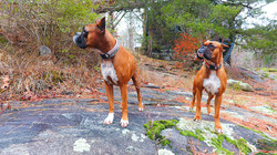 Boxers drone image