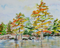 Coosa River Cypress Trees