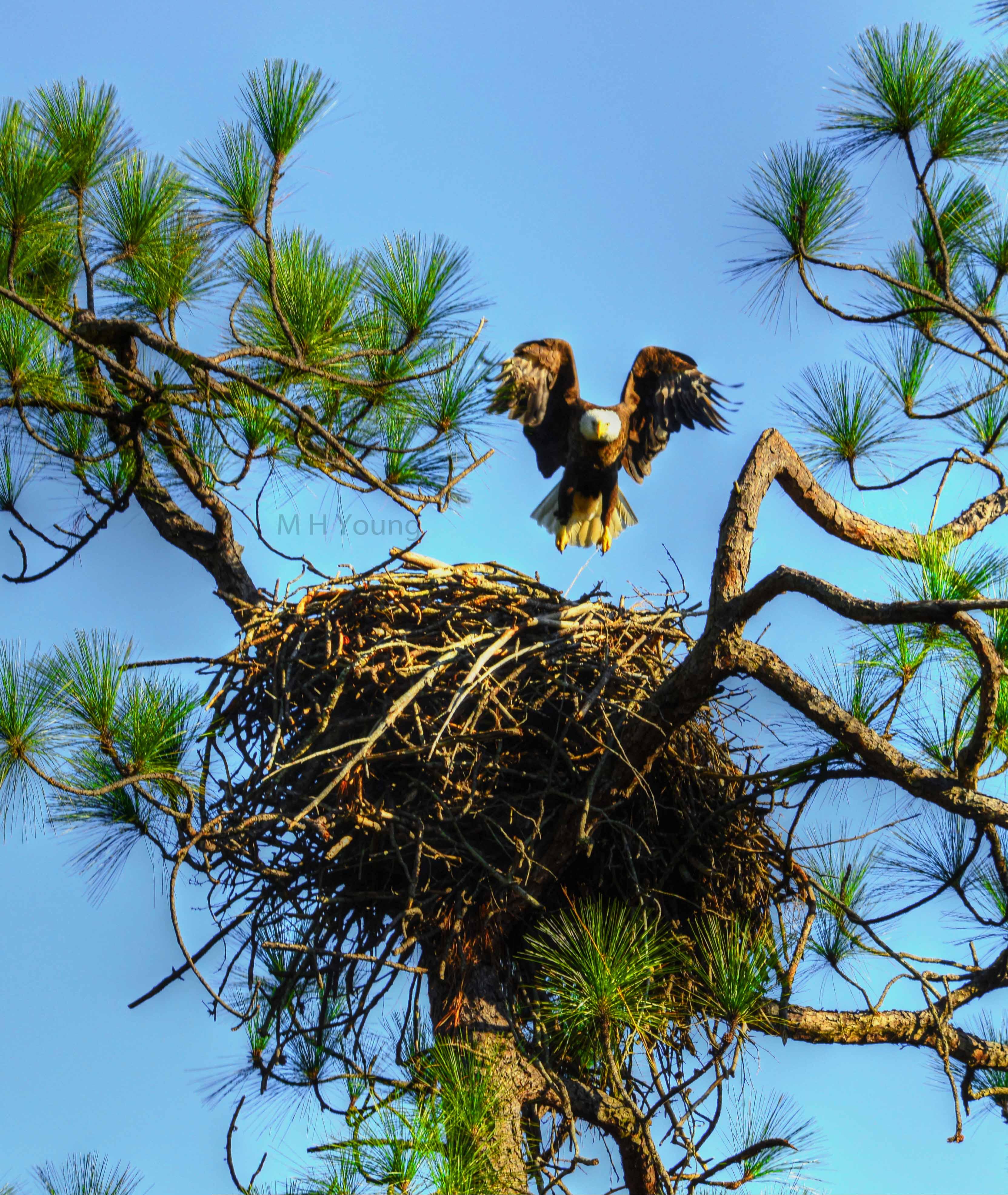 Eagle Coosa # 3 wmlr