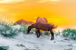 mustangs sunset 19