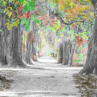 I R live oak painted