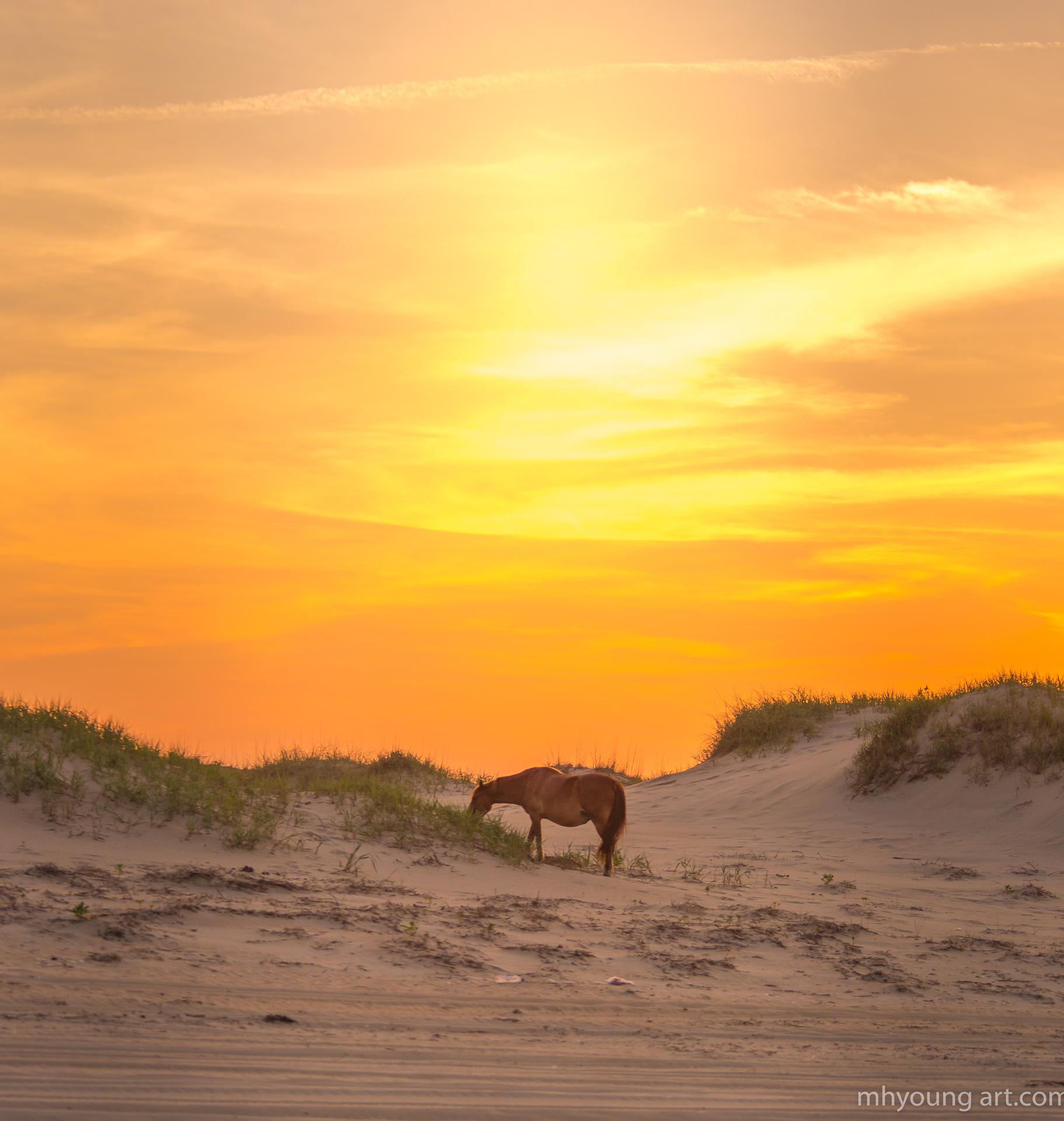 mustangs sunset 27
