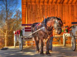 Horses & Buggy