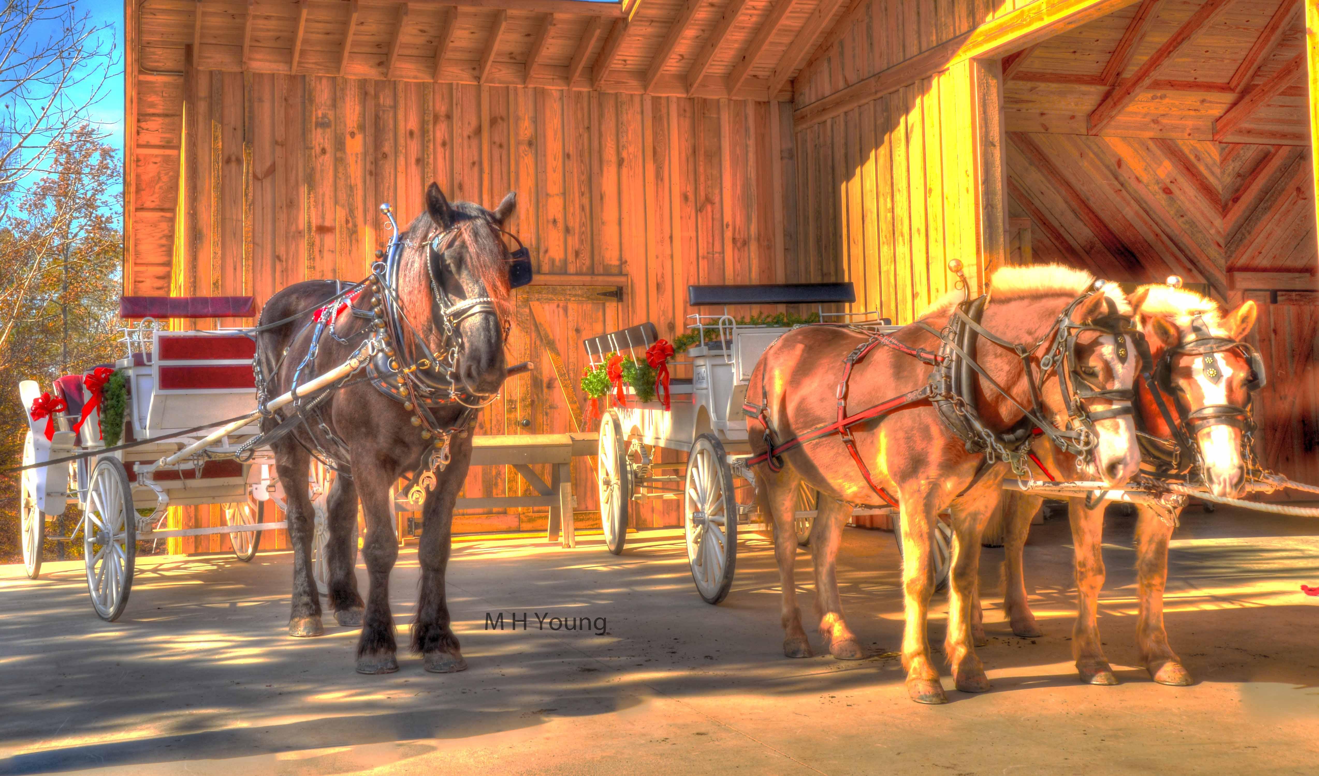 Horses & Buggy #4wm  lr.jpg