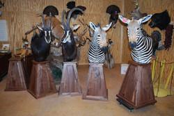 Walnut pedestals