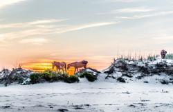 mustangs sunset 10