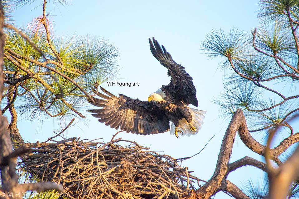 eagle # 9