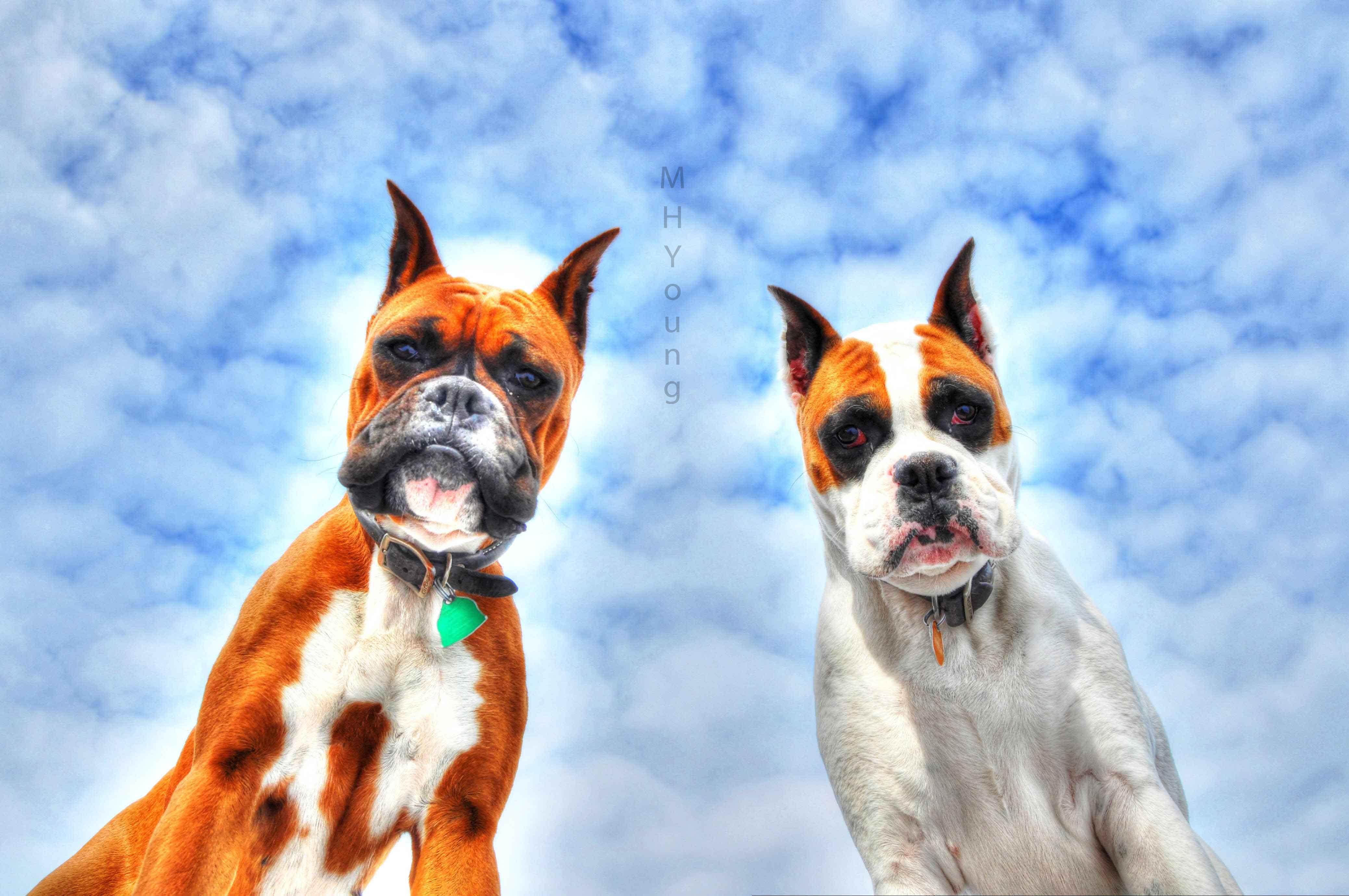 Boxer's in the Sky